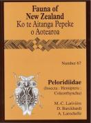 Peloridiidae: (Insecta